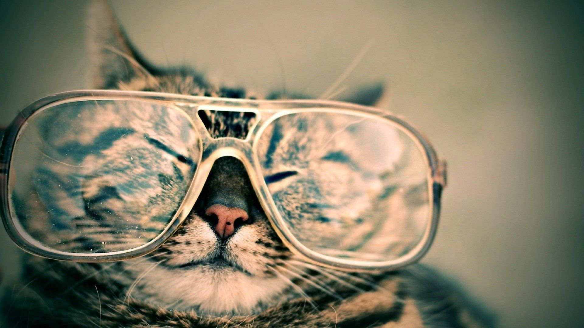 personal growth, funny, cat